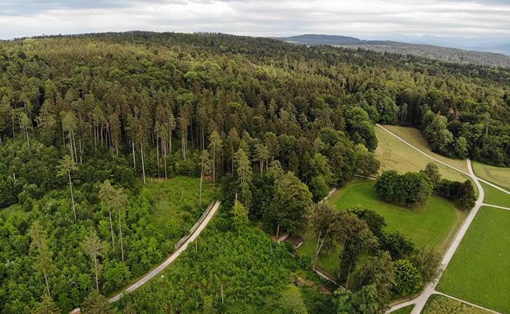 Der Wald als Erholungsraum