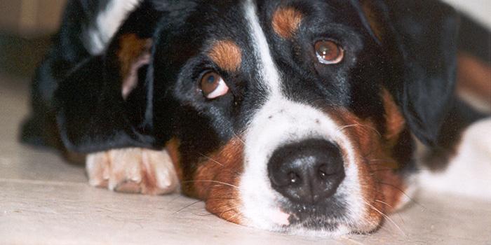 Haustiere am 1. August vor Lärm schützen