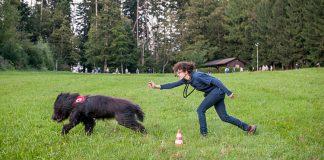 Hund rennt drauflos