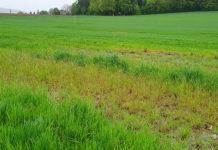 Das Beispiel einer nicht funktionierenden Drainage auf dem Feld bei der Rüterwies. Das Wasser sammelt sich und das Feld kann in weiten Teilen nicht bewirtschaftet werden. (Bilder: cef)